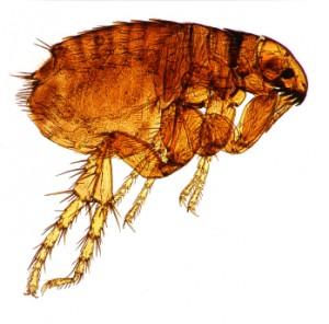 flea.ashx