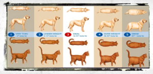 pet weight chart